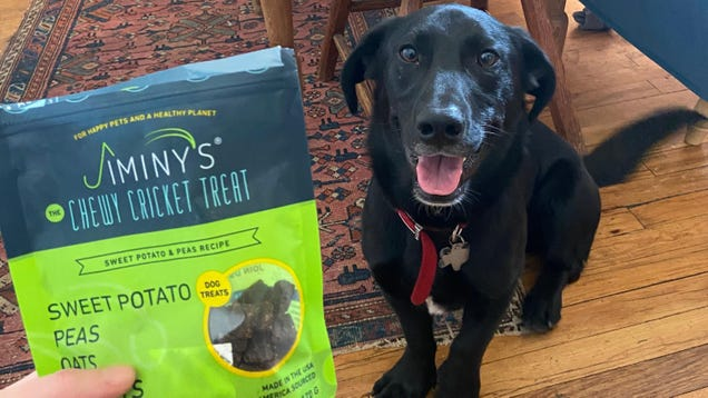 I Fed My Dog Bugs (And You Should, Too)