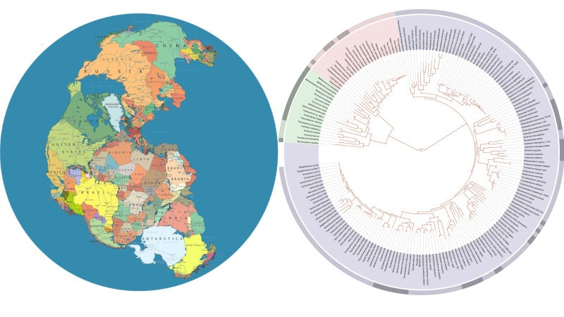 Evidence of Pangea's Breakup Found in Our Evolutionary History