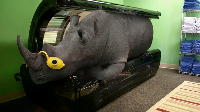 A white rhino in a tanning bed.