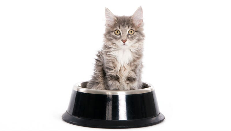 Illustration for article titled Cat Facial Recognition Food Dish Will Make Your Cat Stop Being a Jerk