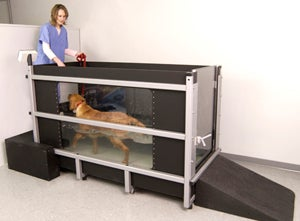 Illustration for article titled Water Resistance Treadmill for Dogs Should Have PETA Up in Arms