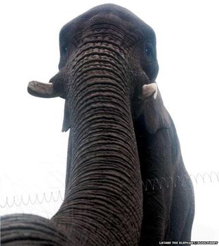 Illustration for article titled Elephant Selfie?