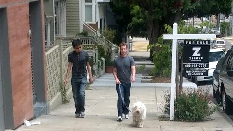 Illustration for article titled Mark Zuckerberg Walking His Fluffy, Rich Dog on a Cloudless Day (Updated)