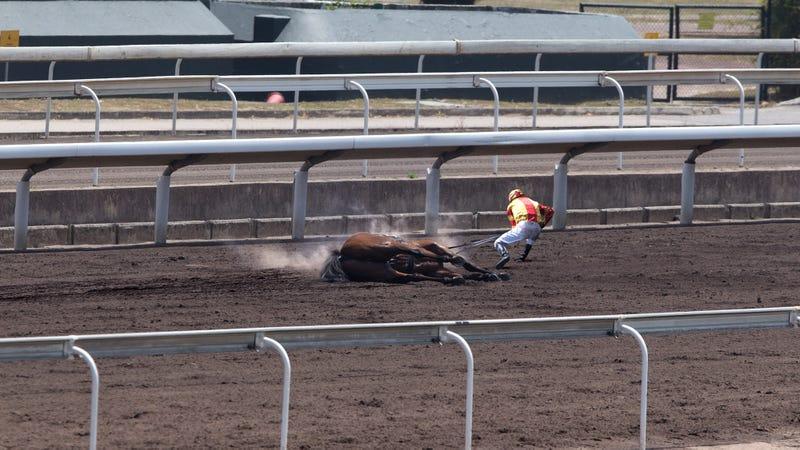 حصل مسؤولو حلبة سباق سانتا أنيتا على المركز الأول لجوكي الذي جر الحصان الميت على بعد 30 ياردة من خط النهاية