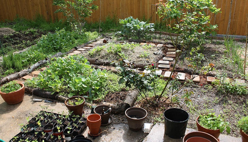The questions to ask when picking plants for your garden for Gardening questionnaire
