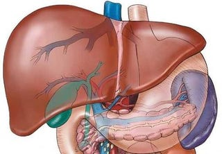 Illustration for article titled Lab-engineered liver cells are the first step to growing replacement livers