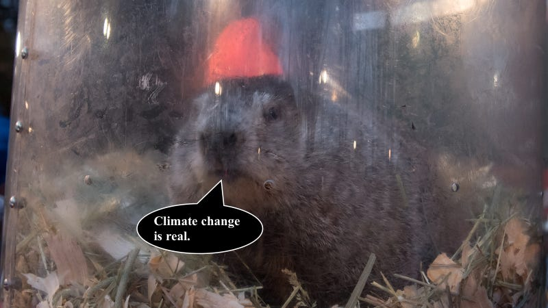 Weather: In South Florida, Punxsutawney Phil would forecast an early spring!