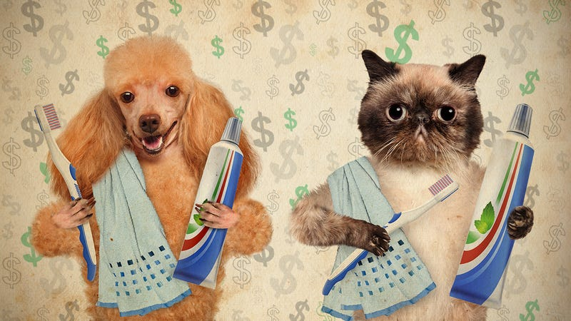 Illustration for article titled How Do You Save Money on Pet Care?