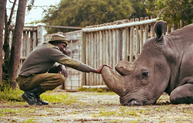 Meet the Man Keeping the Last Two Northern White Rhinos on Earth Alive
