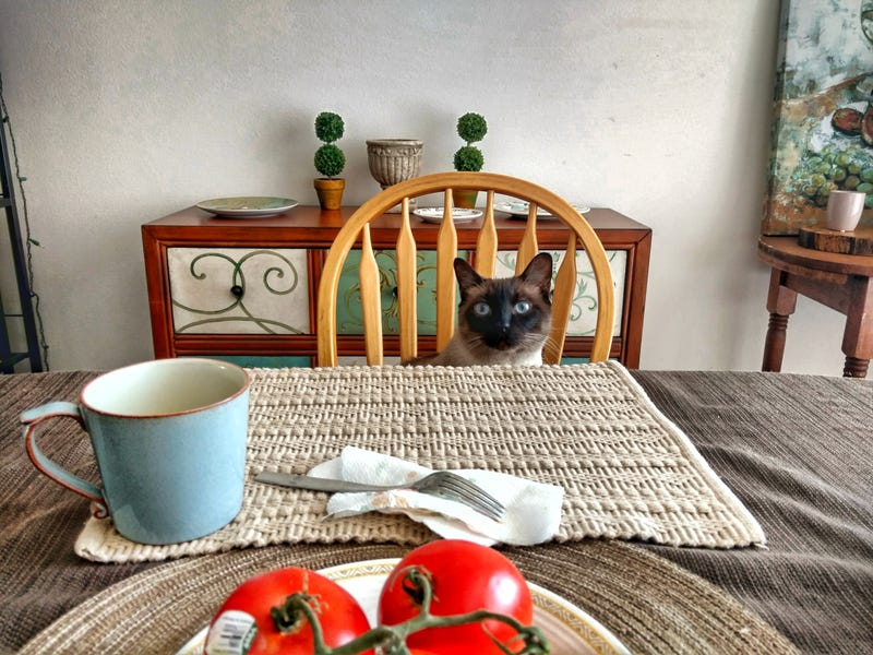 Illustration for article titled I'm far too amused by sitting across the table from a cat