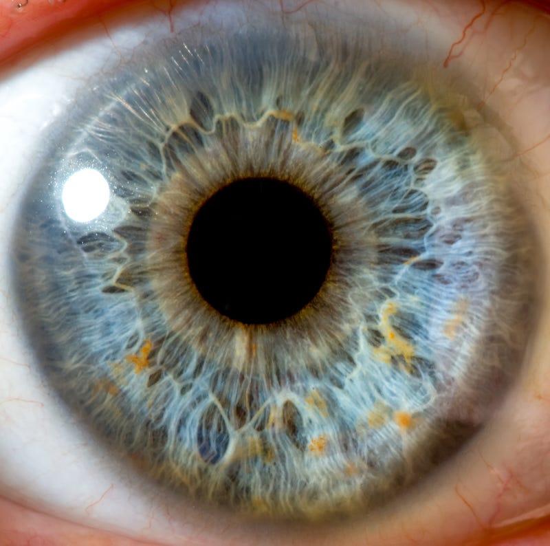 Descubren una nueva parte del cuerpo humano (pista: está en el ojo)