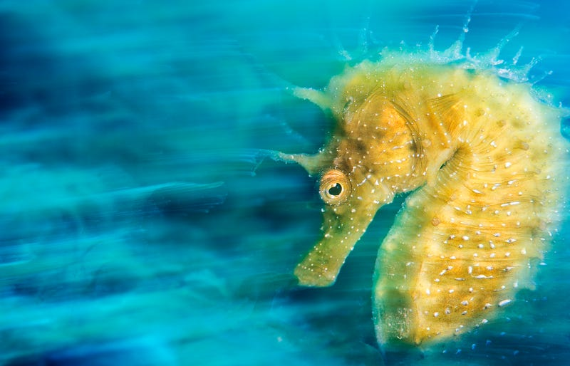 'Gold' by Davide Lopresti (Italy). Underwater Photographer of the Year 2016.