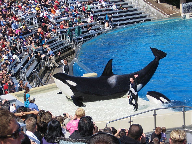 """Illustration for article titled SeaWorld Succeeds In Delaying Orca Welfare Bill """"For Further Study"""""""