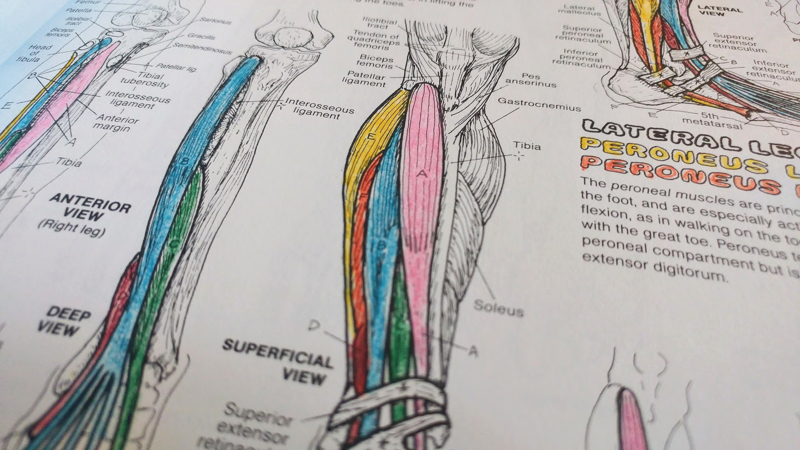 These Realistic Coloring Books Let You Learn While You Color