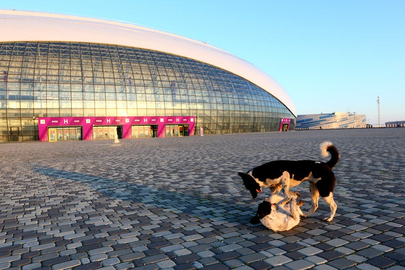 Illustration for article titled The Dogs Of Sochi