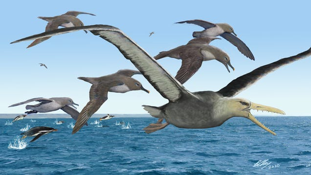 Birds With 20-Foot Wingspans Once Patrolled the Skies of Antarctica