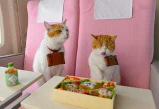 Illustration for article titled Cats Are the Cutest Guides to Japan