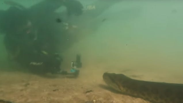 Divers test limits of giant anaconda's patience by repeatedly shoving video camera into its face