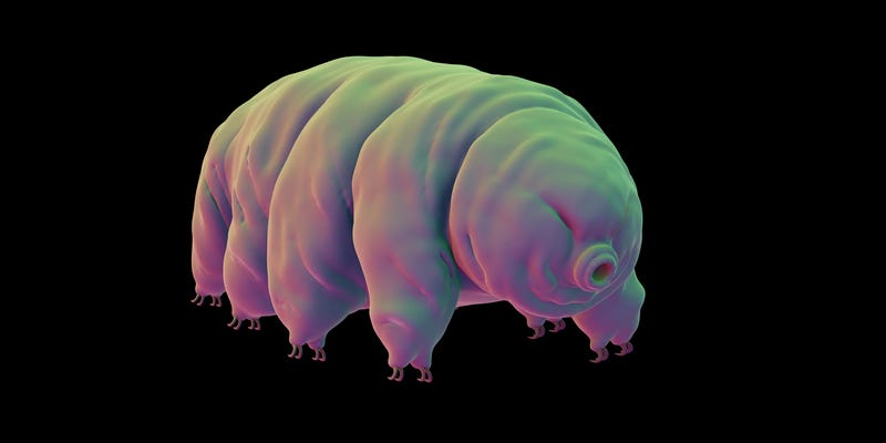 Illustration for article titled Tardigrades Survive Intense Dehydration By Coating Themselves in Glass