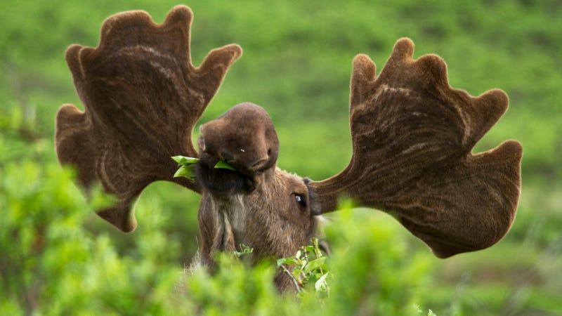 flickr/Denali National Park