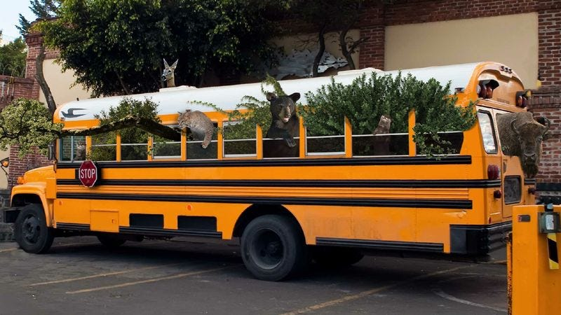 Illustration for article titled New Biodiversity Program Busses In Species From Outside Ecosystems
