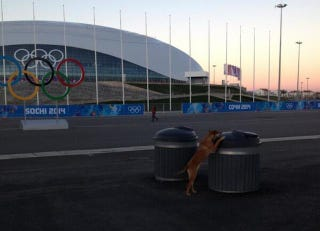 Illustration for article titled Sochi Hires Private Company To Murder Stray Dogs Ahead Of Olympics