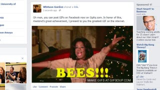Illustration for article titled Giphy Embeds GIFs on Facebook, Is Mankind's Greatest Achievement