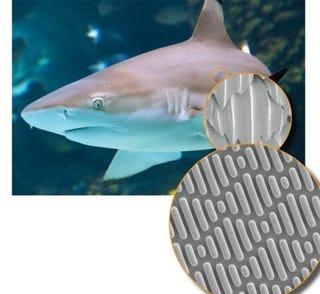 Illustration for article titled Sharkskin Inspired Material Repels Bacteria