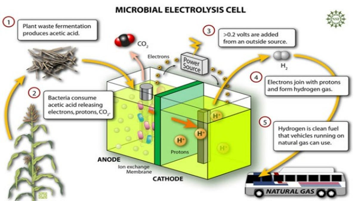 Blinged Out Bacteria Put To Work In Fuel Cells Hydrogen Power Plant Diagram