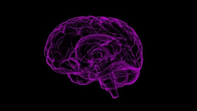 Illustration for article titled Un neurocientífico redefine el concepto de muerte al lograr mantener vivos cerebros de cerdo en laboratorio