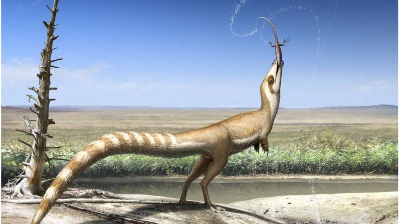 Artist's depiction of Sinosauropteryx. (Image: Bristol University)