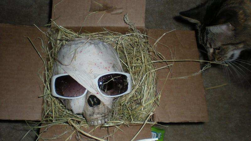 Illustration for article titled Mythic Delivers Code-Laden Human Skull