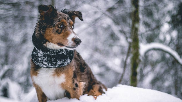 Are  Pet-Friendly  Ice Melts Really Safe for Pets?