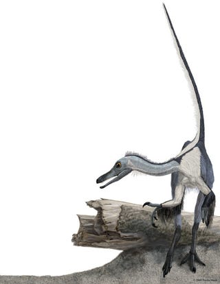 Illustration for article titled Ancient Feathery Beast Solidifies Evidence That Birds Evolved From Dinosaurs