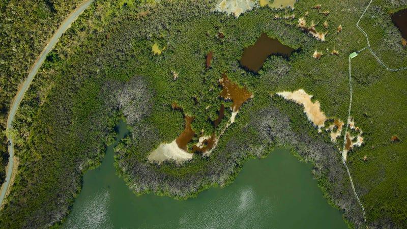 A hard-hit area of coastal forest and mangrove swamp near Laguna Grande in northeastern Puerto Rico.