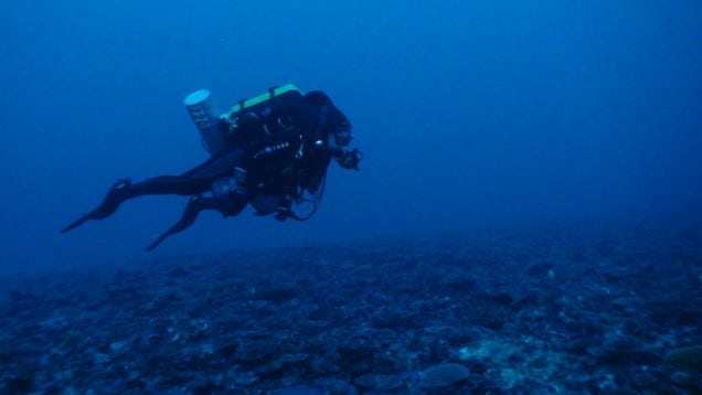 Swimming along a mesophytic coral bed.