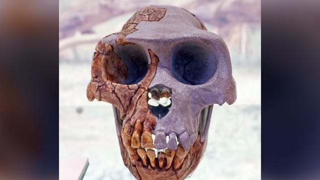 What a Fossilized Hand Says About the Last Common Ancestor Between Humans and Chimpanzees