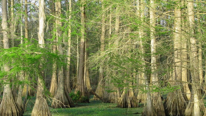 Land (not the plaintiff's) in St. Martin Parish, Louisiana.