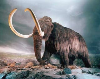Illustration for article titled Mammoth farts could have stopped the ice age 12,000 years ago