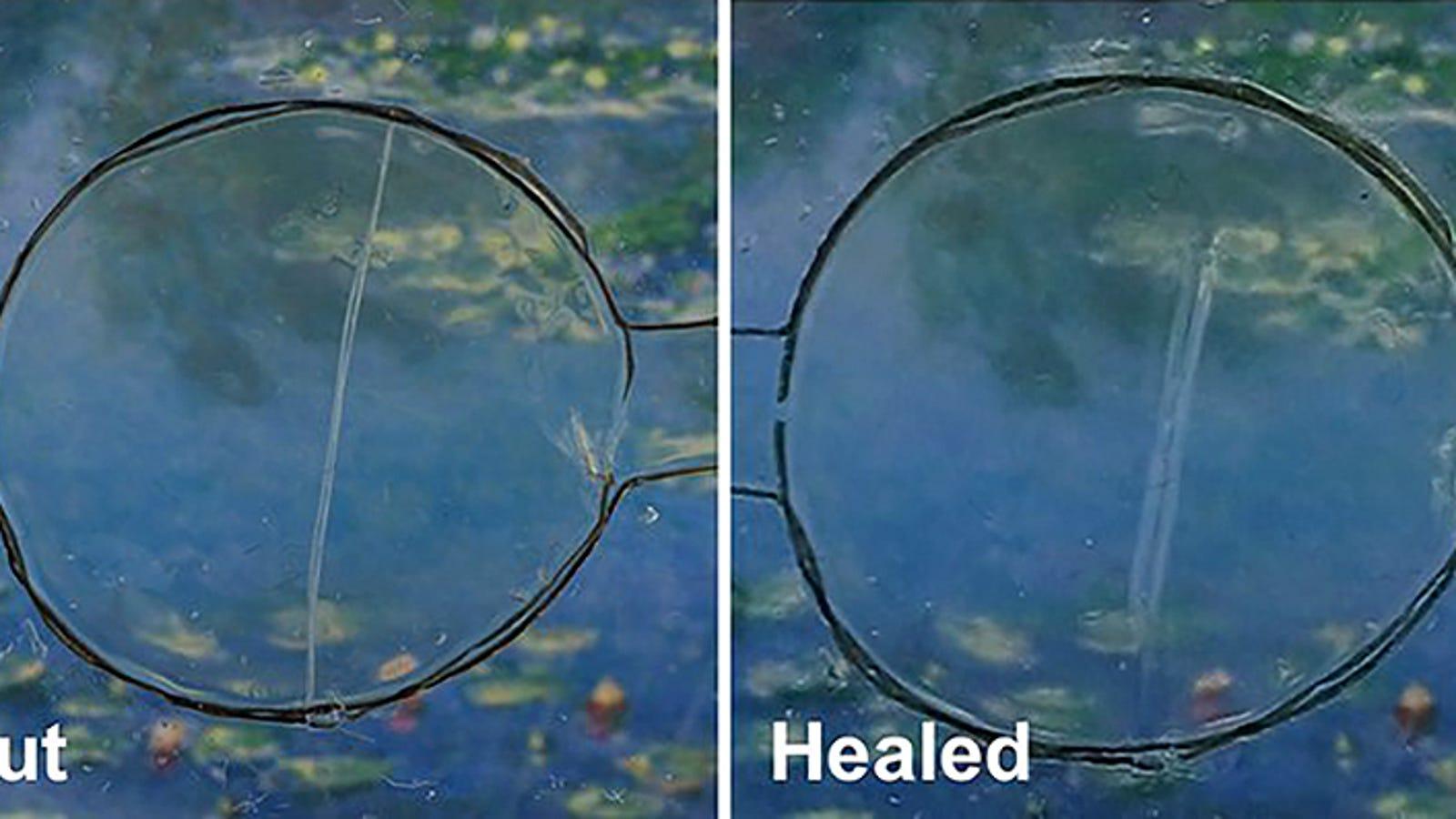 Crean un material que permitirá a los músculos artificiales curarse como si fueran tejido vivo