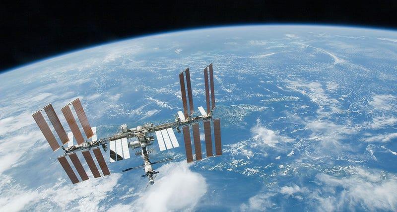 Astronautas encuentran microorganismos marinos vivos en el espacio