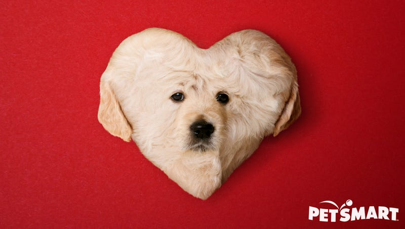 Illustration for article titled PetSmart Introduces Heart-Shaped Puppy For Valentine's Day