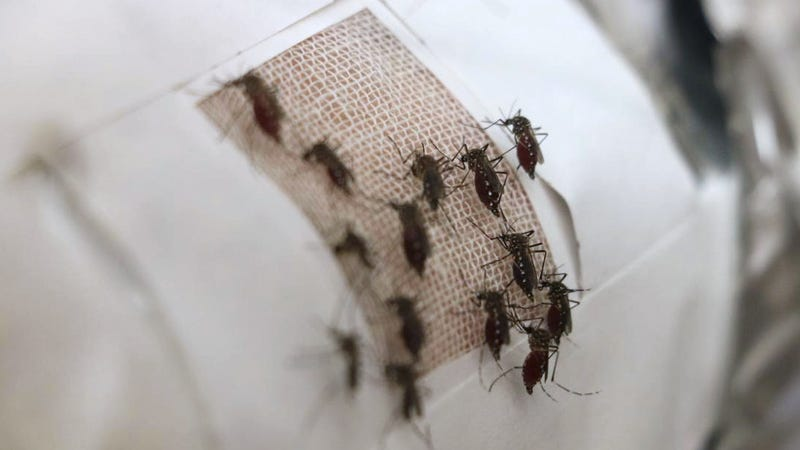 Adding graphene to fabrics serves as a barrier to mosquitoes