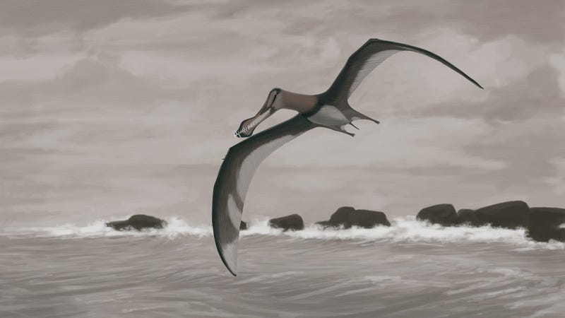 As new research shows, this artist's depiction of the flight pose of the pterosaur Coloborhynchus piscator is probably wrong.