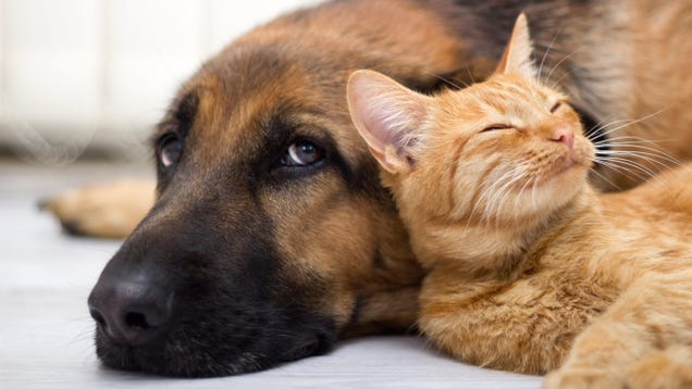 How to Avoid Getting Common Illnesses Spread by Pets