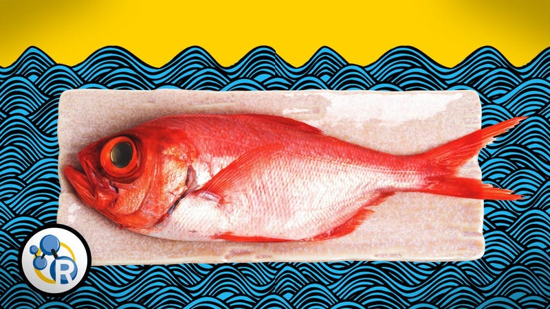 Three ways to make fish smell less fishy with science for I smell like fish