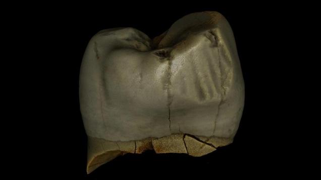 Neanderthals Took Good Care of Their Teeth, Unlike Some of Us