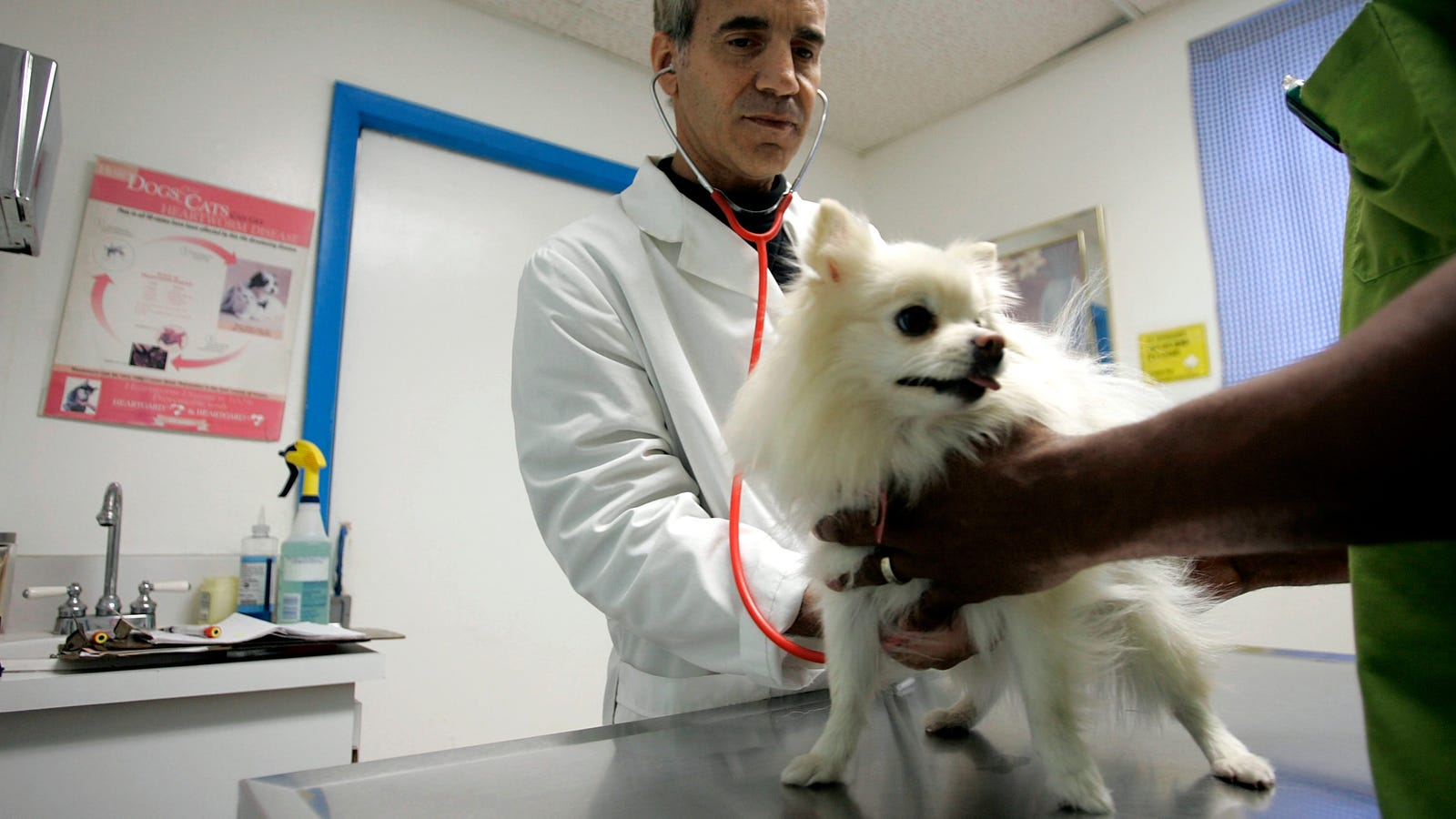 FDA: Dogs' heart disease could be linked to certain veggie-heavy pet foods