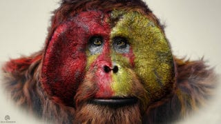 Illustration for article titled Life of the Apes Revealed in Dawn of the Planet of the Apes Concept Art