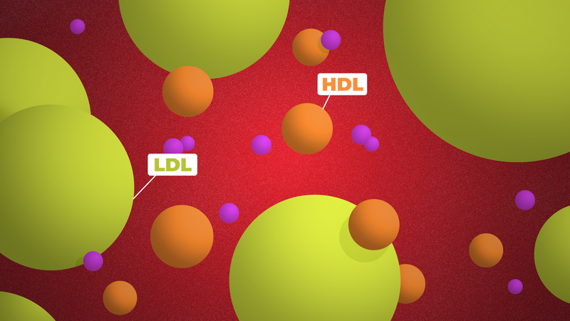 Illustration for article titled What Your Cholesterol Numbers Really Mean